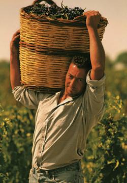 [Wine Story] 이탈리아 모레티 가문의 세테 폰티