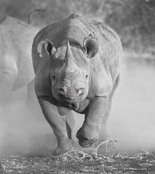 [해시태그 경제 용어] 회색 코뿔소(gray rhino)