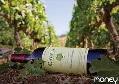 [WINE STORY] 미국 나파밸리 카버네 소비뇽의 제왕 CAYMUS vineyards